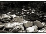 Segni-d'acqua---Gatta-2008.jpg
