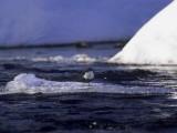 Merlo-acquaiolo-:-Finlandia-in-Inverno.jpg