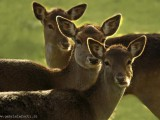 Bambi-e-suoi-fratelli.jpg