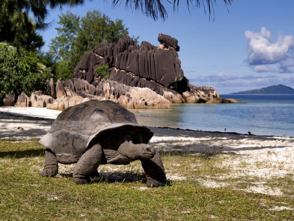 Tartaruga gigante di aldabra bellefoto for Tartarughe in amore
