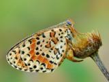 Vola-piccola-farfalla.jpg