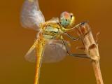 La-piccola-libellula.jpg