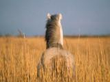 Il-mondo-visto-con-occhi-di-un-cavallo.jpg