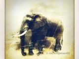 L'elefante-africano-visto-da-un-iPhone.jpg