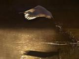 La-naturale-magia-della-luce.jpg