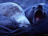 Non-disturbare-il-Leone-(Marino)-che-dorme.jpg