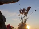 L'alba-sulla-vetta-del-monte-Bolettone.jpg